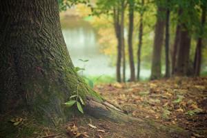 Holz: nachwachsender Baustoff